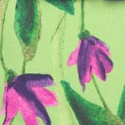 Satch Ivy Blossom