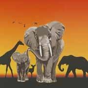 McNeill Africa